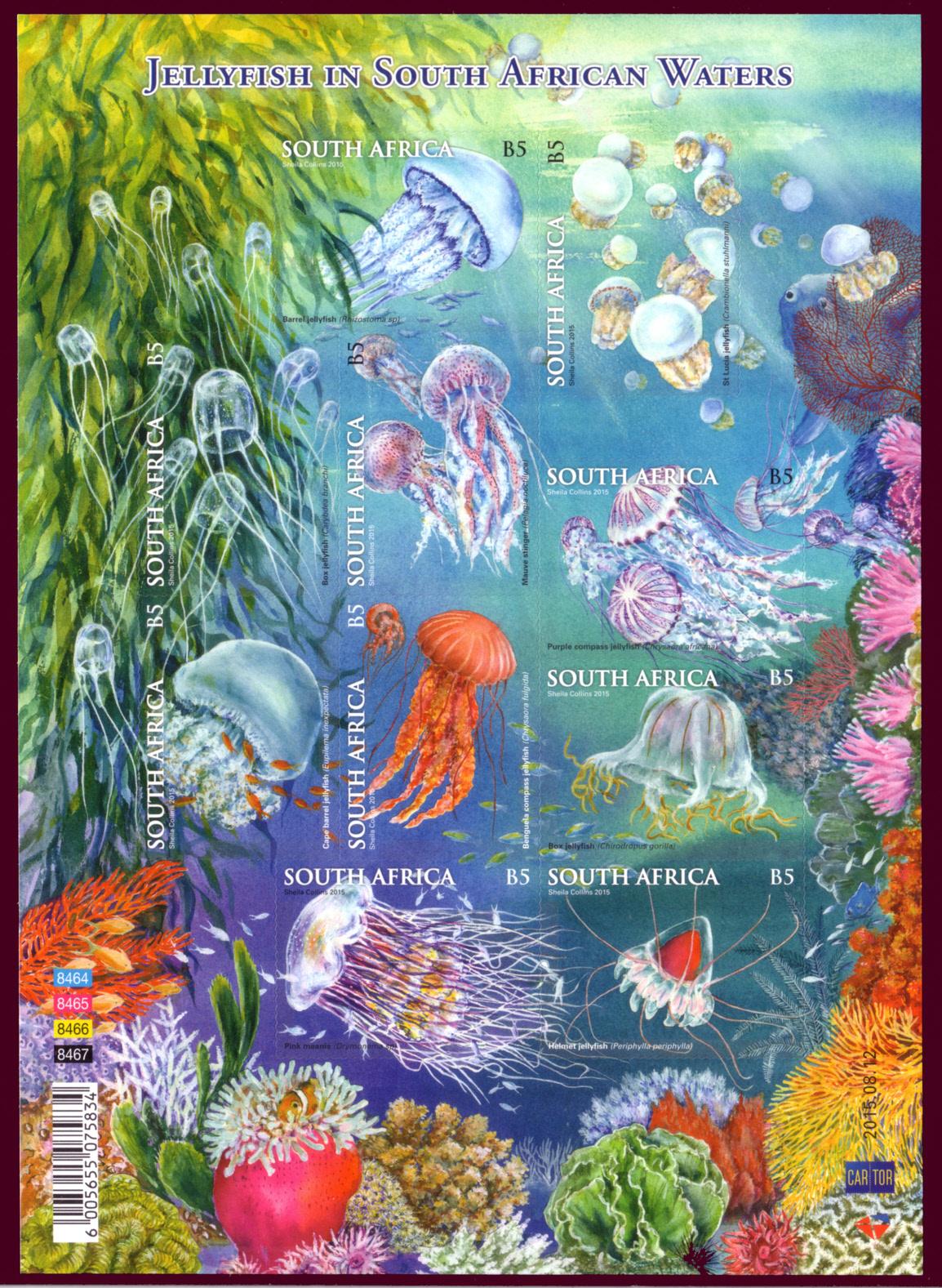 南非水母 - 六一儿童 - 译海拾蚌