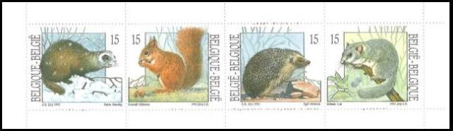 Belgium 1992 Nature - Small Mammals B20.jpg
