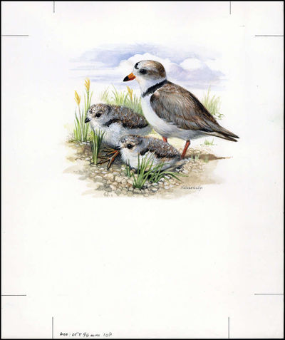 Barbados 1999 Threatened Species Piping Plover WWF c2.jpg