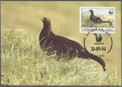 Azerbaijan 1994 The Caucasian Black Grouse d3.jpg
