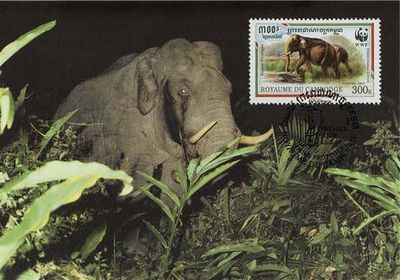 Cambodia 1997 The Indian Elephant a1.jpg
