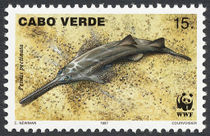 Cape Verde 1997 Small Toothed Saw FIsh a.jpg