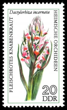 Germany-DDR 1976 Flowers (Orchids) 20.jpg