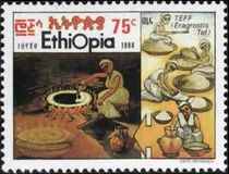 Ethiopia 1990 Cultivation of Cereal Teff d.jpg