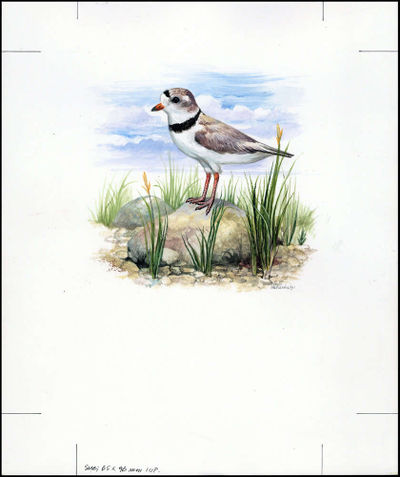 Barbados 1999 Threatened Species Piping Plover WWF a2.jpg