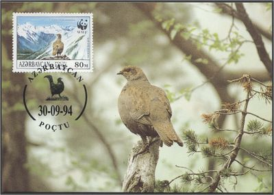 Azerbaijan 1994 The Caucasian Black Grouse b3.jpg