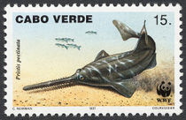 Cape Verde 1997 Small Toothed Saw FIsh c.jpg