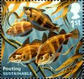 GB 2014 Sustainable Fish d.jpg