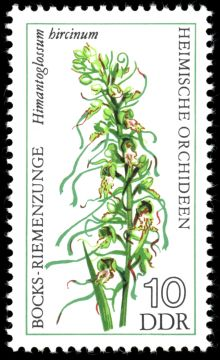 Germany-DDR 1976 Flowers (Orchids) 10.jpg