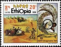Ethiopia 1990 Cultivation of Cereal Teff c.jpg