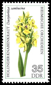 Germany-DDR 1976 Flowers (Orchids) 35.jpg