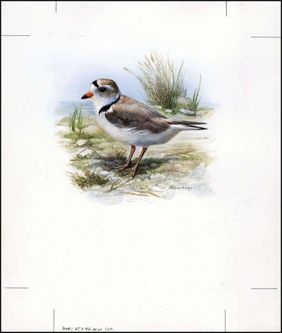 Barbados 1999 Threatened Species Piping Plover WWF d2.jpg