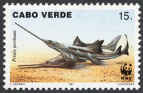 Cape Verde 1997 Small Toothed Saw FIsh d.jpg