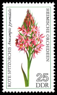 Germany-DDR 1976 Flowers (Orchids) 25.jpg